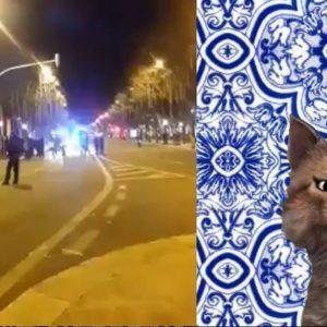 Video gato malaiko cota do Apartheid